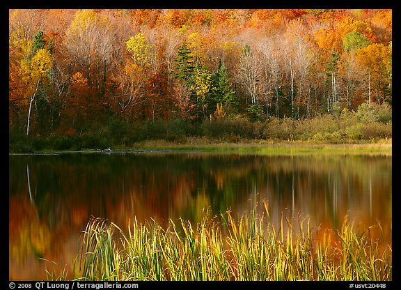 Hill in fall colors reflected in a pond. USA (color)