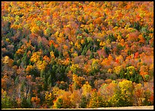 Hillside with trees in brilliant fall foliage. Vermont, New England, USA