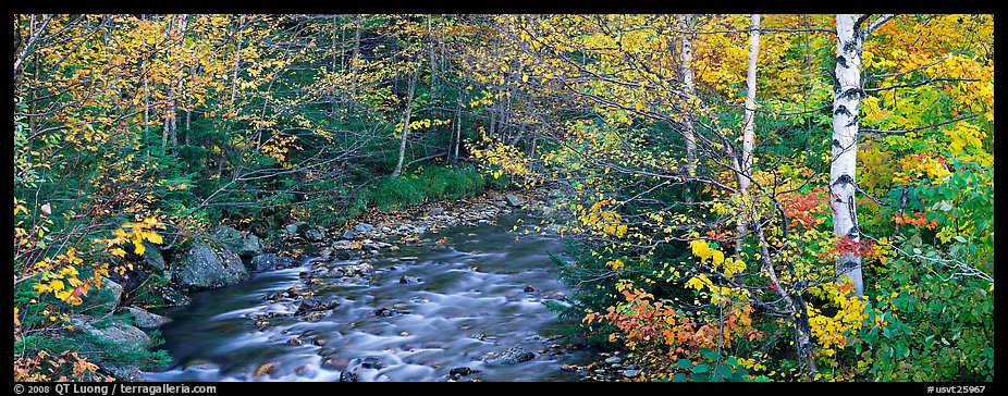 Autumn forest landscape with stream. Vermont, New England, USA (color)