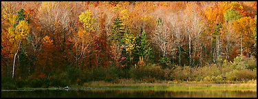Forest edge in autumn. Vermont, New England, USA (Panoramic color)