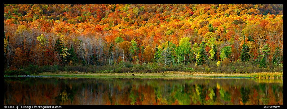 Hillside forest and pond in the fall. Vermont, New England, USA (color)