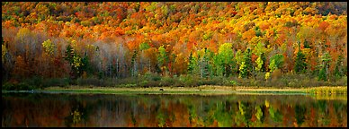 Hillside forest and pond in the fall. Vermont, New England, USA (Panoramic color)