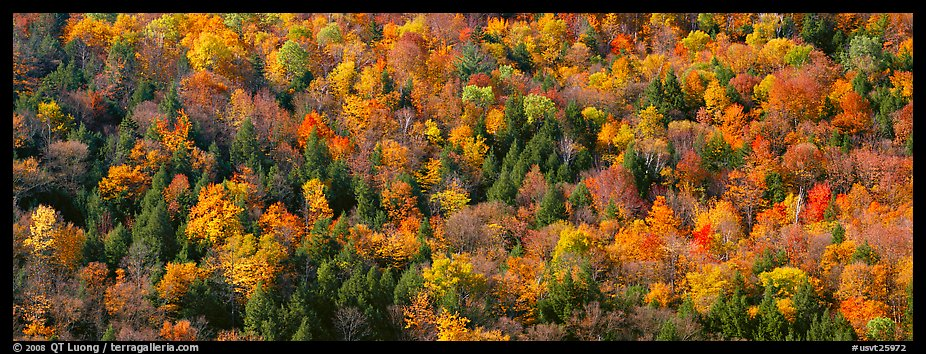 Trees in multicolored foliage on hillside. Vermont, New England, USA (color)
