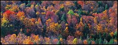 Autumn landscape with trees on hillside. Vermont, New England, USA (Panoramic color)