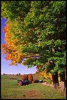 Maple tree and Jenne Farm. Vermont, New England, USA (color)