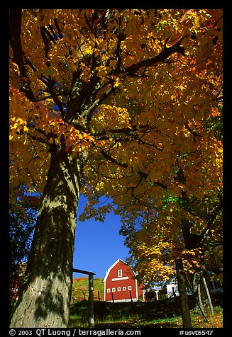 Elm Grove Farm near Woodstock. Vermont, New England, USA
