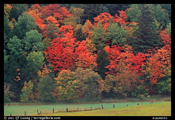 Meadow, fence, and colorful trees. Vermont, New England, USA