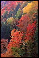 Multicolored trees on hill, Quechee Gorge. Vermont, New England, USA