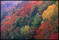 Multicolored trees on hill, Quechee Gorge. Vermont, New England, USA ( color)