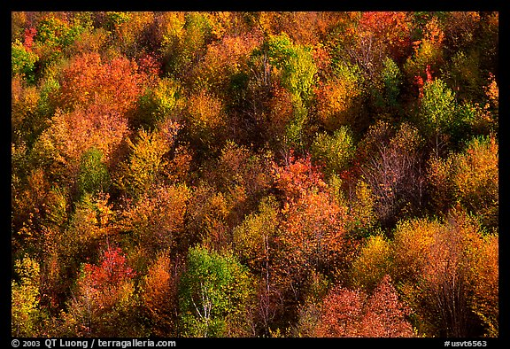 Hillside covered with trees in autumn color, Green Mountains. Vermont, New England, USA