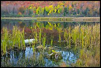 Reeds and pond, Green Mountains. Vermont, New England, USA ( color)