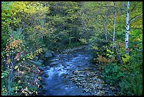 Stream and birch trees. Vermont, New England, USA