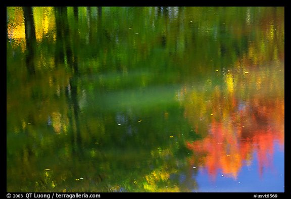 Foliage reflections. Vermont, New England, USA