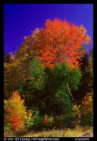 Fall Foliage New England Wallpaper http://www.terragalleria.com/america/north-east/vermont/picture.usvt6570.html