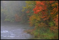 Misty river with trees in fall foliage. Vermont, New England, USA (color)