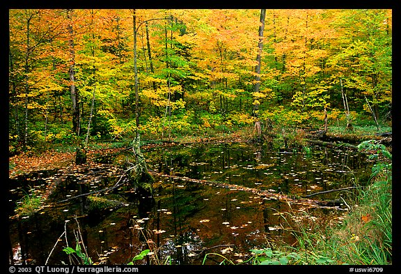 Pond surrounded by trees in fall colors. Wisconsin, USA