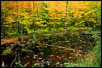 Pond surrounded by trees in fall colors. Wisconsin, USA ( color)