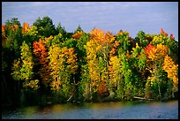 Trees in fall colors bordering a lake. Wisconsin, USA