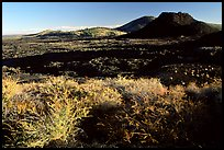Brush in lava field, Craters of the Moon National Monument. Idaho, USA ( color)