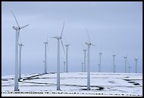Electricity-generating windmills. Oregon, USA (color)