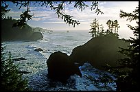 Coastline and trees, late afternoon, Samuel Boardman State Park. Oregon, USA