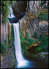 Basalt columns and Toketee Falls. Oregon, USA