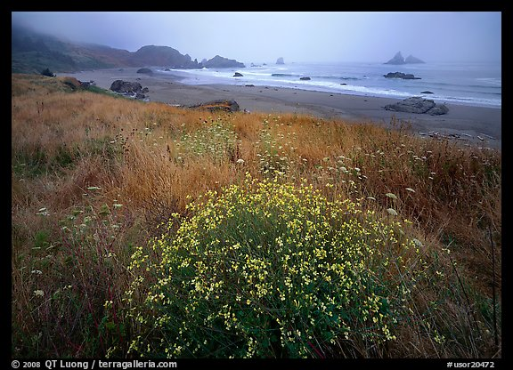 Flowers, grasses, and off-shore rocks in the fog. USA (color)