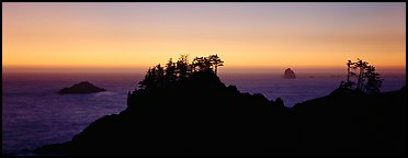 Sunset seascape beyond ridge of trees. Oregon, USA