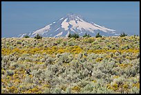 Mt Hood above sagebrush-covered plateau. Oregon, USA ( color)