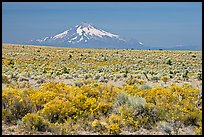 Sagebrush desert and Mt Hood. Oregon, USA