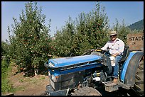 Man on tractor in orchard. Oregon, USA