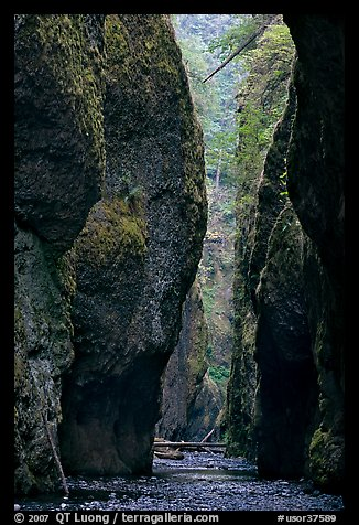 Narrow canyon, Oneonta Gorge. Columbia River Gorge, Oregon, USA (color)
