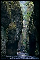 Narrow canyon, Oneonta Gorge. Columbia River Gorge, Oregon, USA ( color)