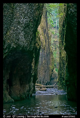 Oneonta Gorge. Columbia River Gorge, Oregon, USA (color)