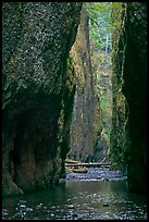 Oneonta Gorge. Columbia River Gorge, Oregon, USA ( color)