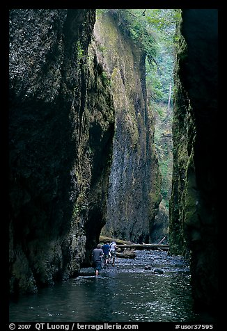 Hikers wading, Oneonta Gorge. Columbia River Gorge, Oregon, USA (color)