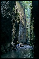 Hikers wading, Oneonta Gorge. Columbia River Gorge, Oregon, USA