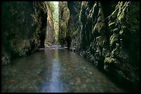 Stream and moss-covered walls, Oneonta Gorge. Columbia River Gorge, Oregon, USA (color)