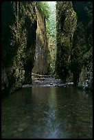 Stream and slot-like canyon walls, Oneonta Gorge. Columbia River Gorge, Oregon, USA