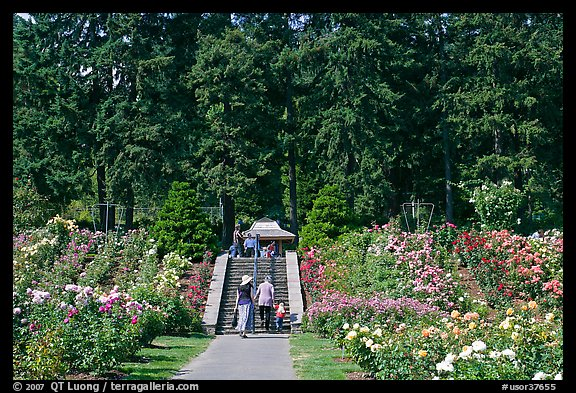 Picture/Photo: Alley in Rose Garden. Portland, Oregon, USA