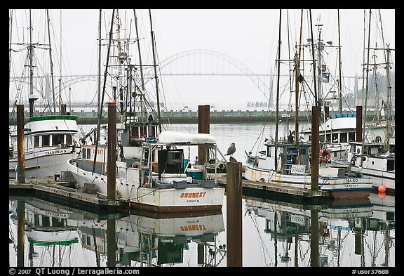 Commercial fishing boats and Yaquina Bay in fog. Newport, Oregon, USA (color)