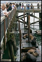 Tourists observing  Sea Lions in harbor. Newport, Oregon, USA (color)