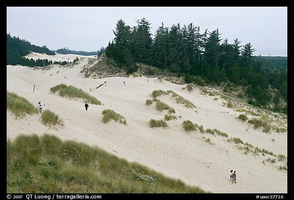 Dunes and hikers, Oregon Dunes National Recreation Area. Oregon, USA (color)