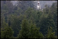 Spruce-Hemlock forest and Umpqua River Lighthouse. Oregon, USA