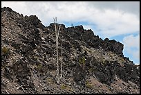 Lava outcrop, Deschutes National Forest. Oregon, USA ( color)