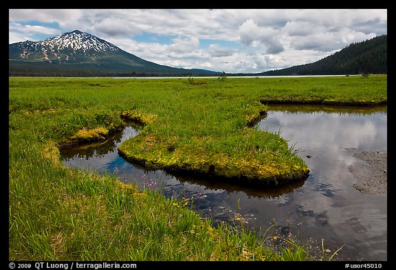 Meadow, South Sister, Deschutes National Forest. Oregon, USA (color)