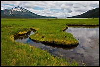 Meadow, South Sister, Deschutes National Forest. Oregon, USA ( color)