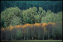 Trees in autumn color and evergreens. Oregon, USA