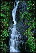 Waterfall, Hamburg Mountain State Parke. Oregon, USA (color)