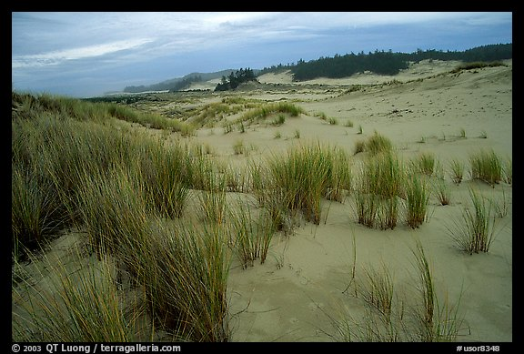 Sand Dunes near Florence. Oregon, USA (color)